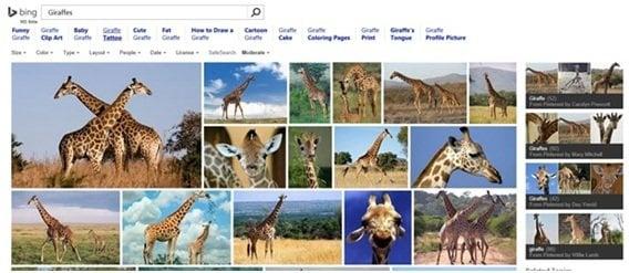 Por qué Bing Image Search es mejor que la competencia 4