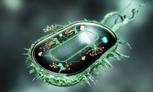 Biofabricación: Desbloqueando el poder de las células vivas en Microsoft Research