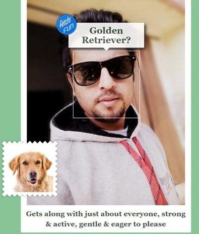 Microsoft Fetch te dirá la raza de ese perro.