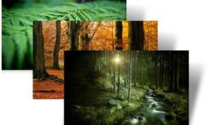 Sea ecológico con los temas de árboles jóvenes y bosques para Windows 7 de Microsoft