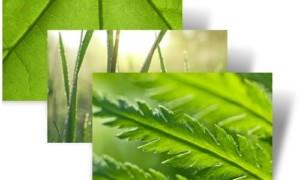 Descargue el tema de Green World para Windows 7 desde Microsoft