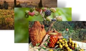 Descargar el tema de Acción de Gracias Harvest Time para Windows 7 desde Microsoft