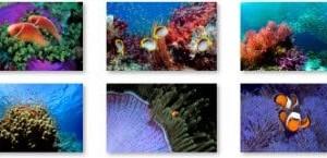 Nuevo tema de Windows 7 Tropical Fish de Microsoft es simplemente impresionante!