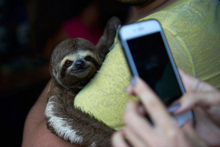 El maltrato que sufre la vida silvestre por las fotos turísticas de Instagram 1